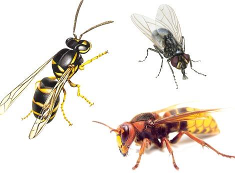 Rimedio contro le vespe fabulous se nel vostro giardino for Puntura vespa cane
